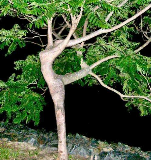 dancer_tree